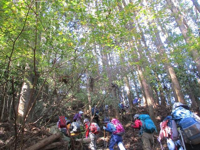 画像3: 【山旅会・登山ガイドこだわりツアー】添乗員からの便り矢倉岳ツアーにいってまいりました!