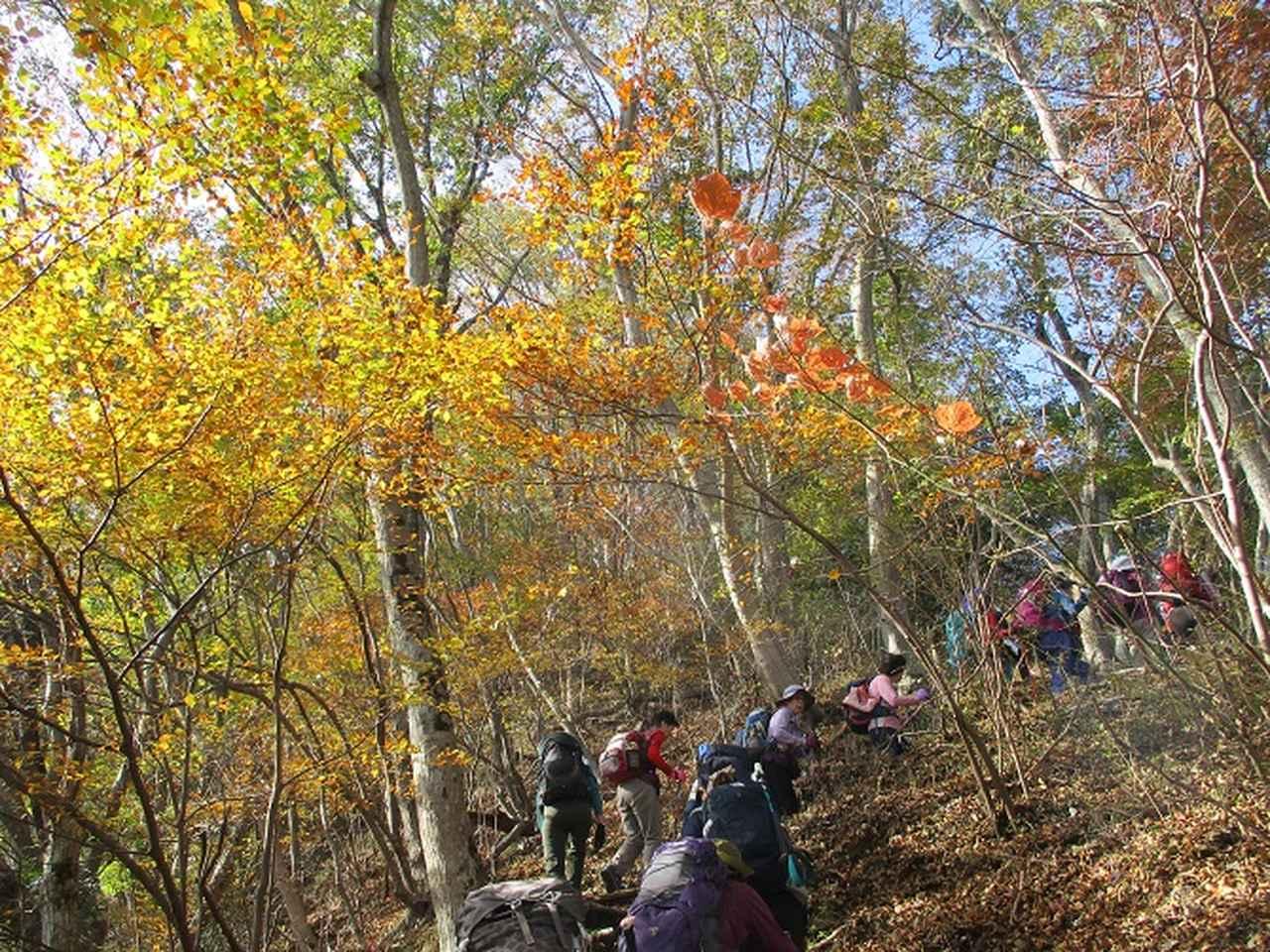画像4: 【山旅会・登山ガイドこだわりツアー】添乗員からの便り矢倉岳ツアーにいってまいりました!