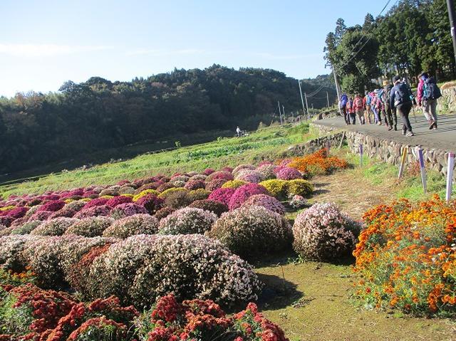 画像2: 【山旅会・登山ガイドこだわりツアー】添乗員からの便り矢倉岳ツアーにいってまいりました!