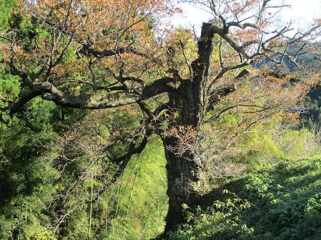 画像7: 【山旅会・登山ガイドこだわりツアー】岡田ガイドからの便り・戸倉城山ツアーの下見にいってまいりました!