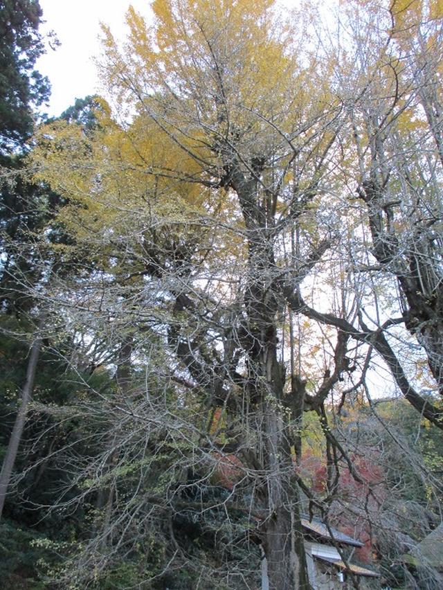 画像2: 【山旅会・登山ガイドこだわりツアー】岡田ガイドからの便り・戸倉城山ツアーの下見にいってまいりました!