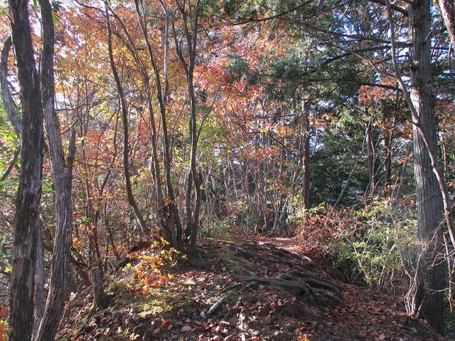 画像11: 【山旅会・登山ガイドこだわりツアー】岡田ガイドからの便り・戸倉城山ツアーの下見にいってまいりました!