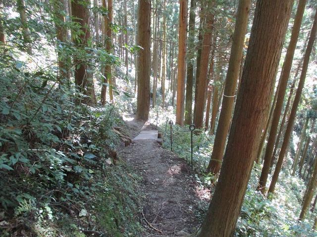 画像3: 【山旅会・登山ガイドこだわりツアー】岡田ガイドからの便り・戸倉城山ツアーの下見にいってまいりました!