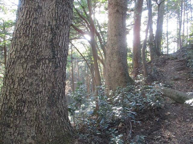 画像10: 【山旅会・登山ガイドこだわりツアー】岡田ガイドからの便り・戸倉城山ツアーの下見にいってまいりました!