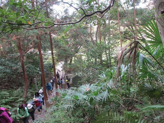 画像7: 【山旅会・登山ガイドこだわりツアー】岡田ガイドからの便り・散在ヶ池から祇園山ツアーにいってまいりました!