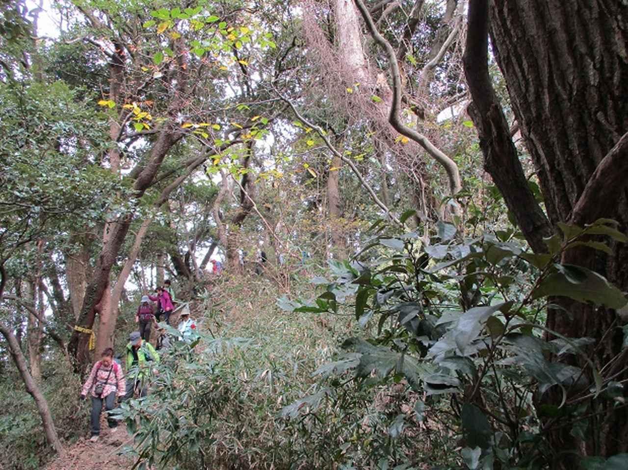 画像8: 【山旅会・登山ガイドこだわりツアー】岡田ガイドからの便り・散在ヶ池から祇園山ツアーにいってまいりました!
