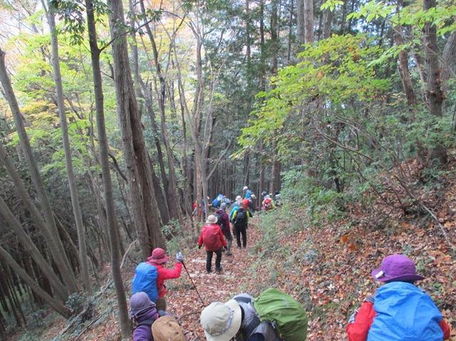 画像12: 11月22日に岡田ガイドの現地集合コースで、 戸倉三山の1つ、 臼杵山 へ行って来ました♪