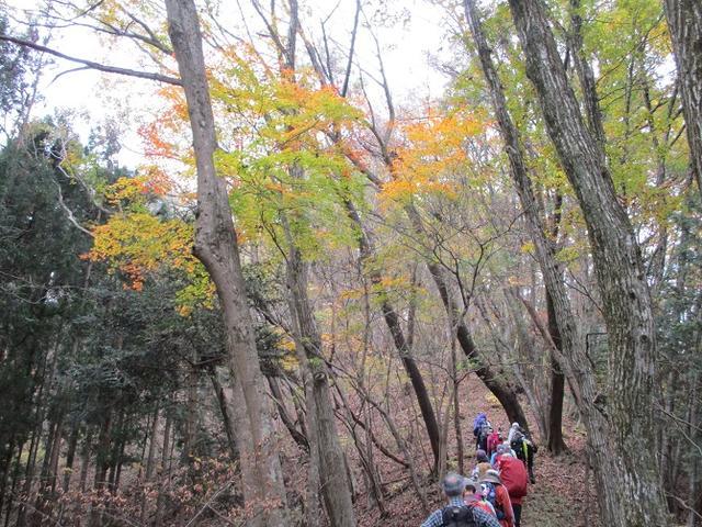 画像2: 11月22日に岡田ガイドの現地集合コースで、 戸倉三山の1つ、 臼杵山 へ行って来ました♪