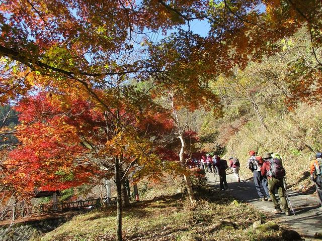 画像7: 11月21日に岡田ガイドのコースで、山梨県富士川町にたたずむ 大柳川渓谷 へ行って来ました♪