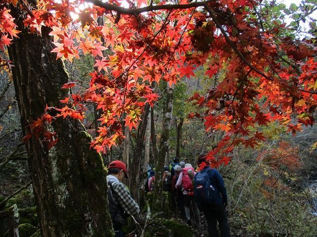 画像5: 11月21日に岡田ガイドのコースで、山梨県富士川町にたたずむ 大柳川渓谷 へ行って来ました♪