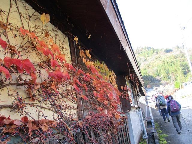画像1: 11月21日に岡田ガイドのコースで、山梨県富士川町にたたずむ 大柳川渓谷 へ行って来ました♪