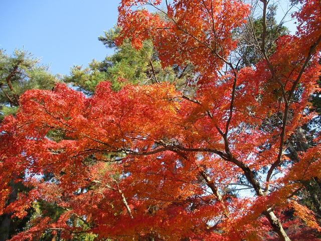 画像2: 【山旅会・登山ガイドこだわりツアー】山旅会ツアー1月までの催行状況