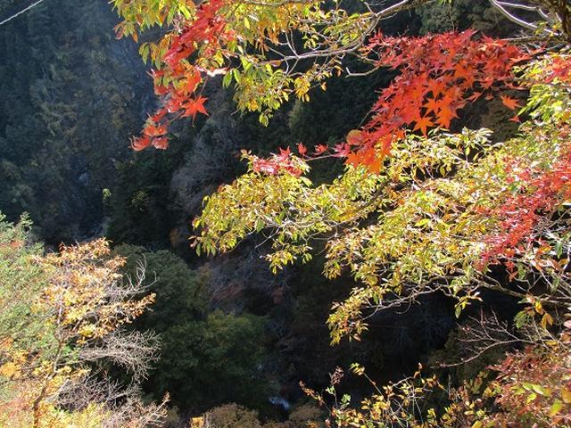 画像11: 11月21日に岡田ガイドのコースで、山梨県富士川町にたたずむ 大柳川渓谷 へ行って来ました♪