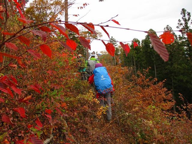 画像10: 11月22日に岡田ガイドの現地集合コースで、 戸倉三山の1つ、 臼杵山 へ行って来ました♪