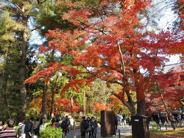 画像2: 11月27日より2泊3日で 山旅会 「京都」 へ行ってきました!