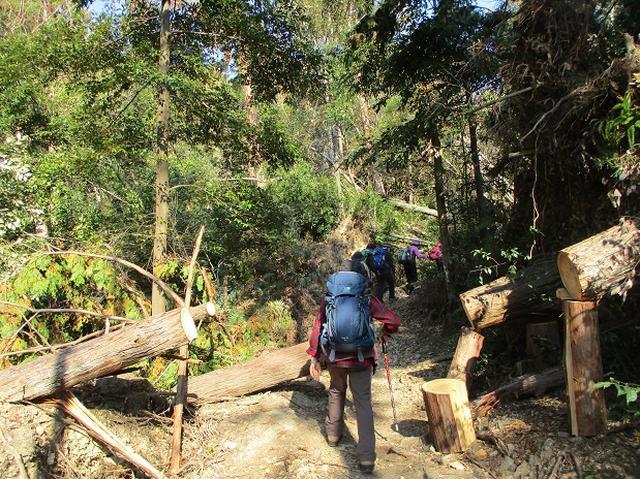 画像6: 11月27日より2泊3日で 山旅会 「京都」 へ行ってきました!