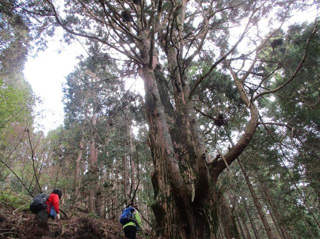 画像11: 先日11月27日より2泊3日で 山旅会 「京都」 ツアーにいってまいりました!