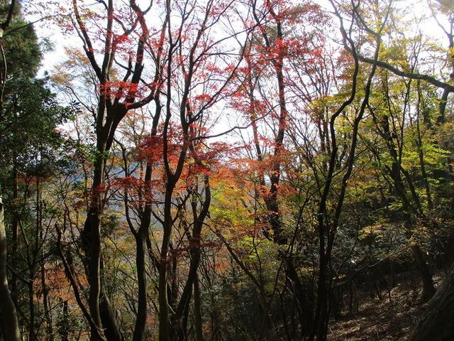 画像9: 12月の山旅会 「思親山」 の直前下見報告です