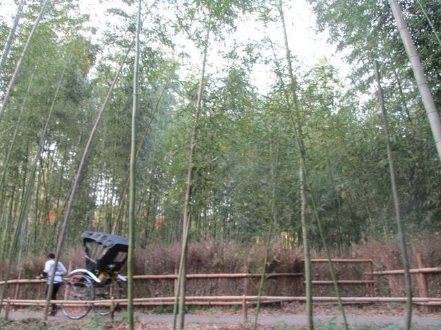 画像11: 11月27日より2泊3日で 山旅会 「京都」 ツアーへ行ってまいりました