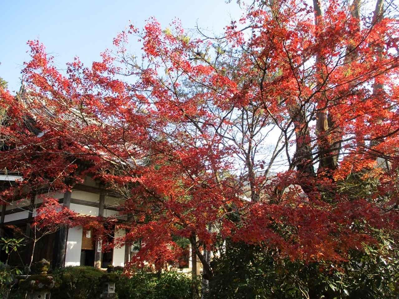 画像5: 11月27日より2泊3日で 山旅会 「京都」 ツアーへ行ってまいりました