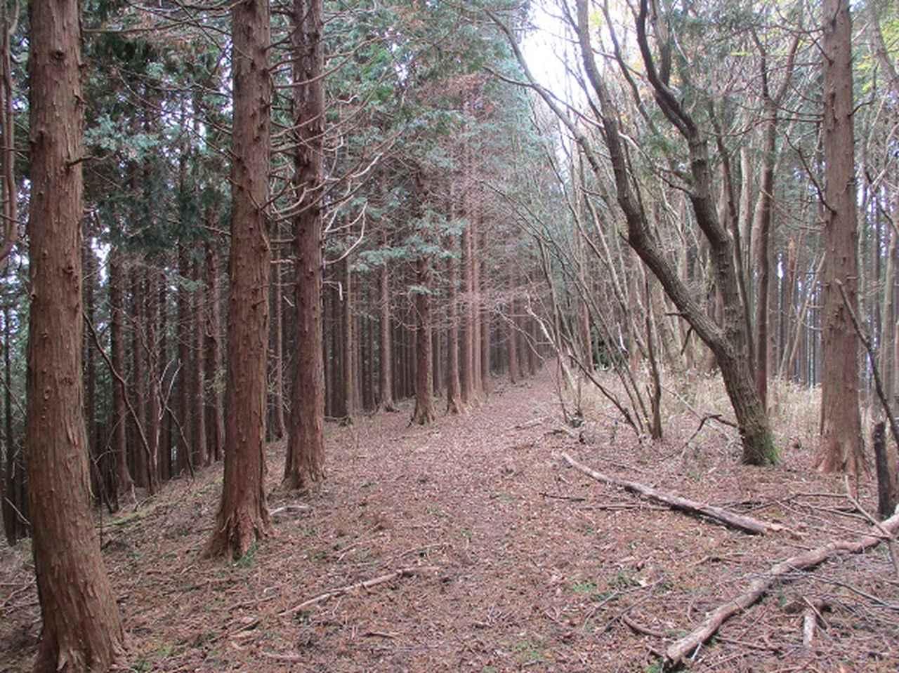 画像7: 12月の山旅会 「思親山」 の直前下見報告です