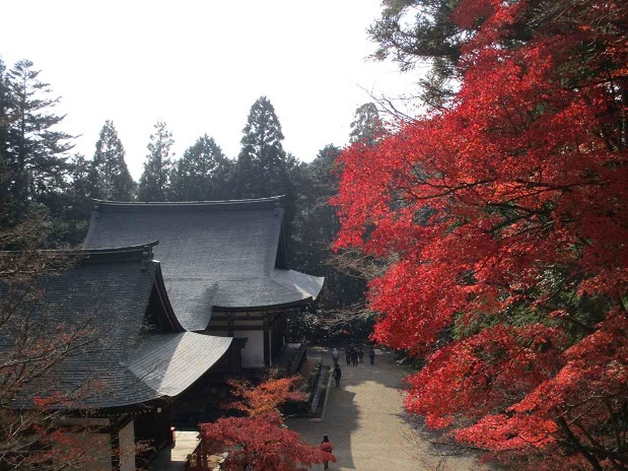 画像7: 11月27日より2泊3日で 山旅会 「京都」 ツアーへ行ってまいりました