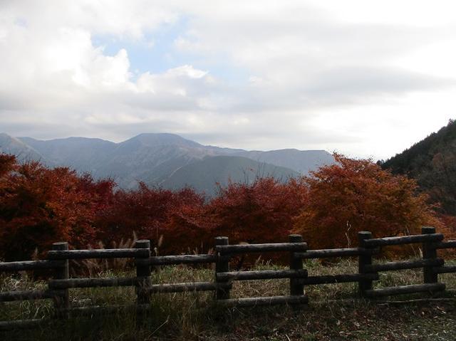 画像2: 12月の山旅会 「思親山」 の直前下見報告です