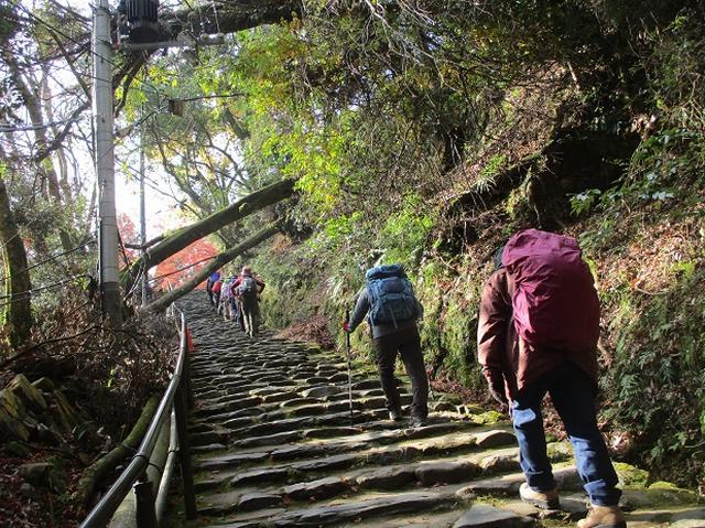 画像6: 11月27日より2泊3日で 山旅会 「京都」 ツアーへ行ってまいりました