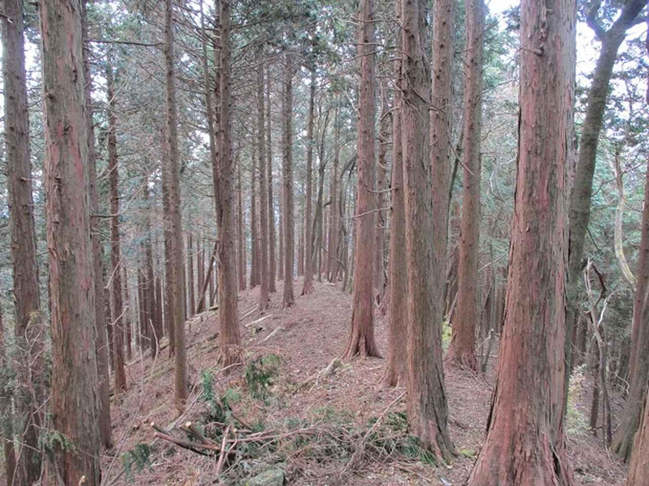 画像8: 12月の山旅会 「思親山」 の直前下見報告です