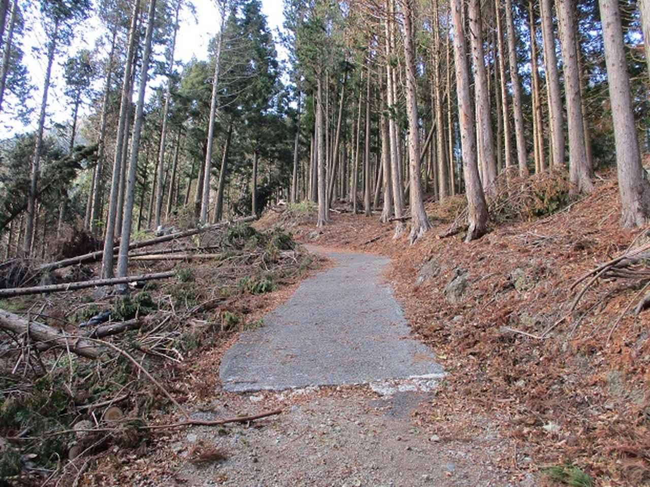 画像7: 岡田健ガイドより、12月の山旅会ツアー直前下見の報告