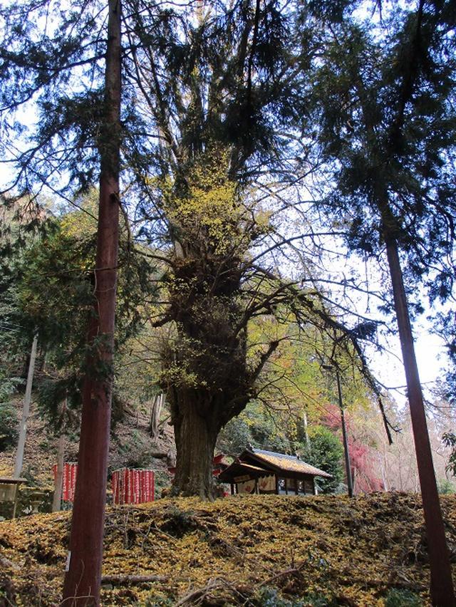 画像3: 岡田健ガイドより、12月の山旅会ツアー直前下見の報告