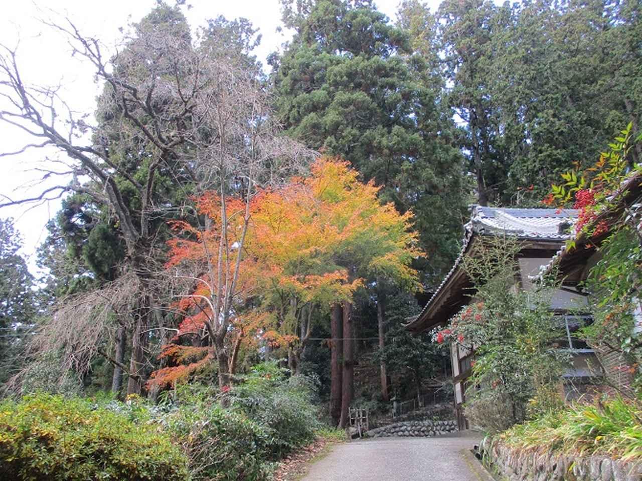 画像4: 岡田健ガイドより、12月の山旅会ツアー直前下見の報告
