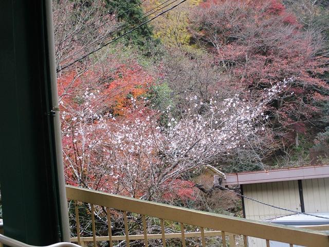 画像9: 岡田健ガイドより、山旅会「大山」ツアーのご報告