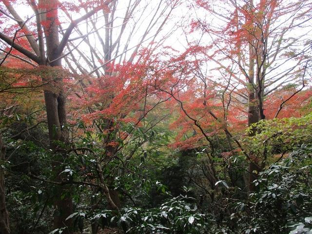 画像10: 岡田健ガイドより、現地集合ツアー「能見台から大丸山」の直前下見報告