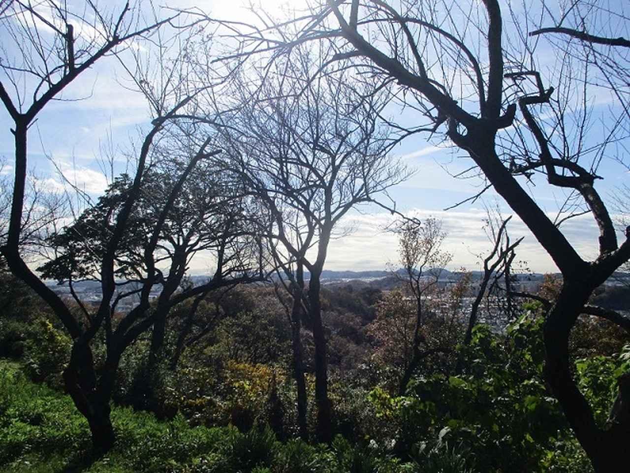 画像2: 岡田健ガイドより、現地集合ツアー「能見台から大丸山」の直前下見報告