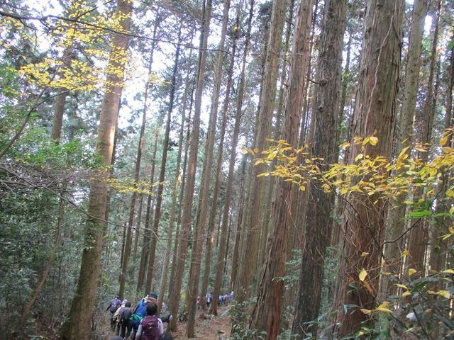 画像11: 12月7日の岡田ガイドのコースで 「思親山」 に行って来ました!