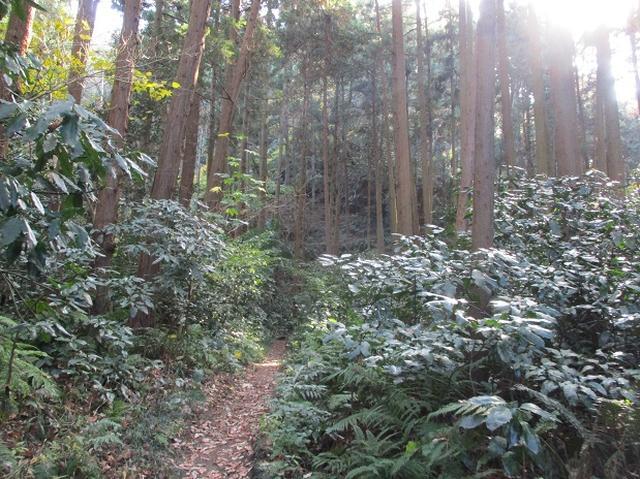 画像9: このツアーは 「鎌倉から三浦半島を歩こう(全15回)」 の3回目のツアーです