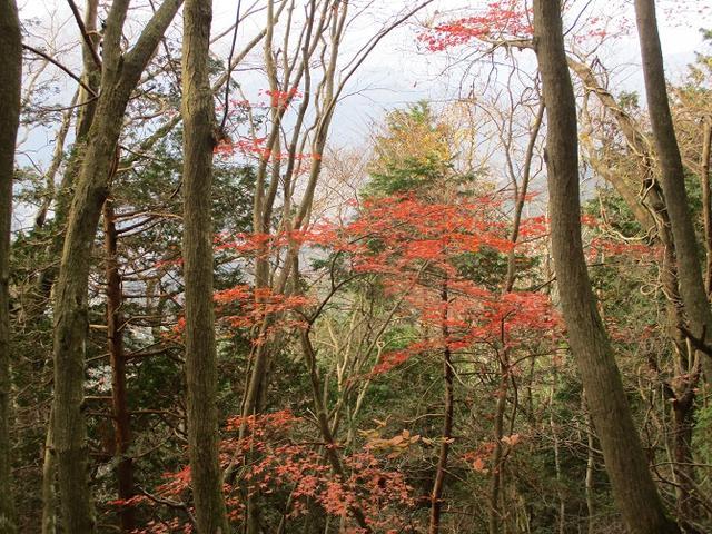 画像10: 12月7日の岡田ガイドのコースで 「思親山」 に行って来ました!