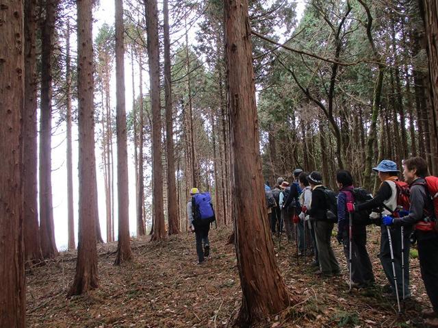 画像8: 12月7日の岡田ガイドのコースで 「思親山」 に行って来ました!