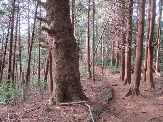画像13: 12月の山旅会現地集合 「鐘ヶ岳」 ツアーの直前下見報告です
