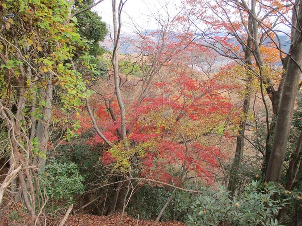 画像8: 12月の山旅会現地集合 「鐘ヶ岳」 ツアーの直前下見報告です