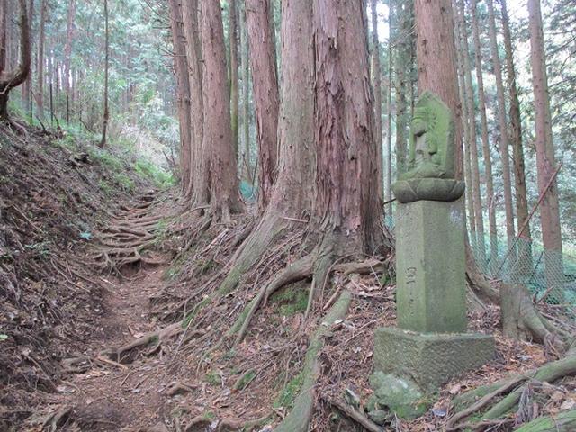 画像4: 12月の山旅会現地集合 「鐘ヶ岳」 ツアーの直前下見報告です