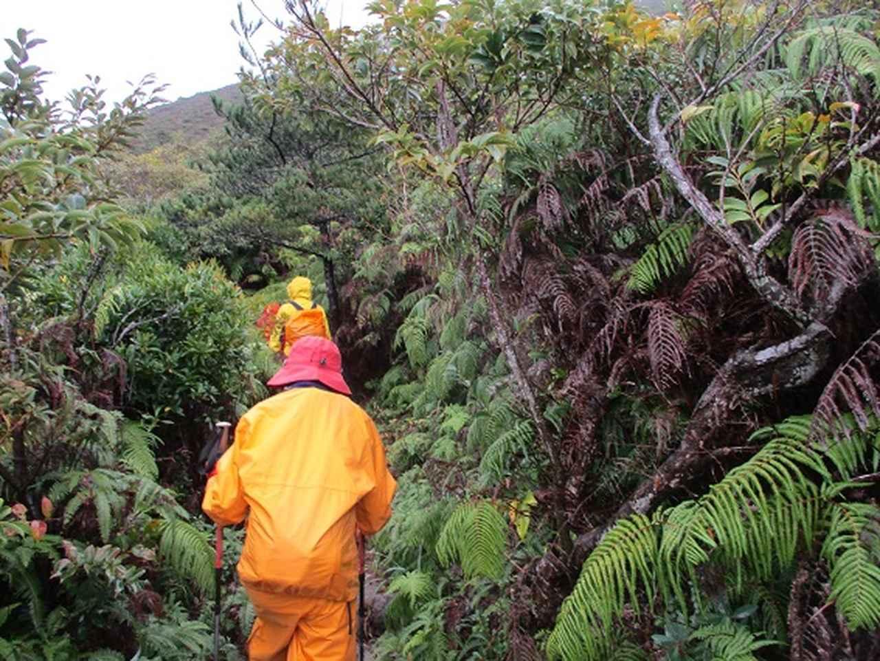 画像11: 先日12月11日より 山旅会 「神津島」 ツアーに いってまいりました!