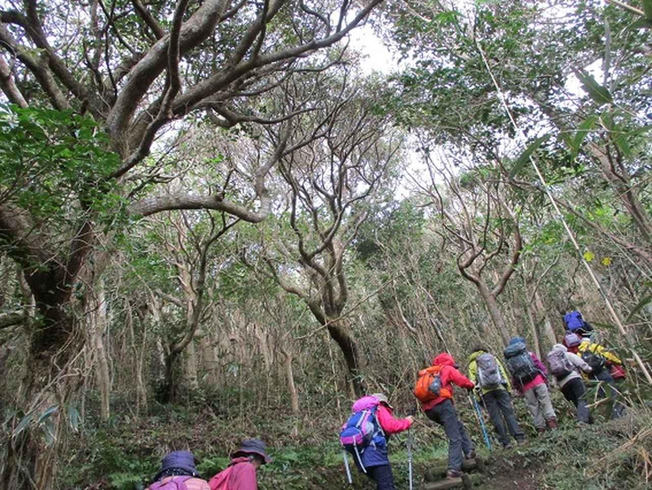 画像4: 12月11日より山旅会 「神津島」 ツアーに いってまいりました!
