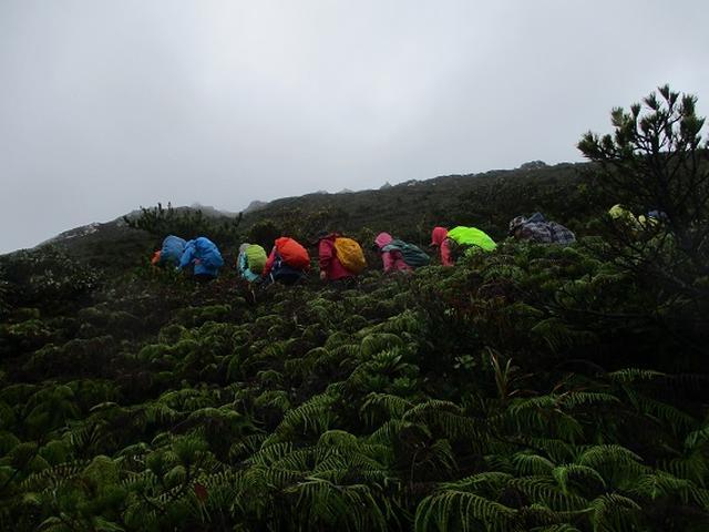 画像6: 先日12月11日より 山旅会 「神津島」 ツアーに いってまいりました!