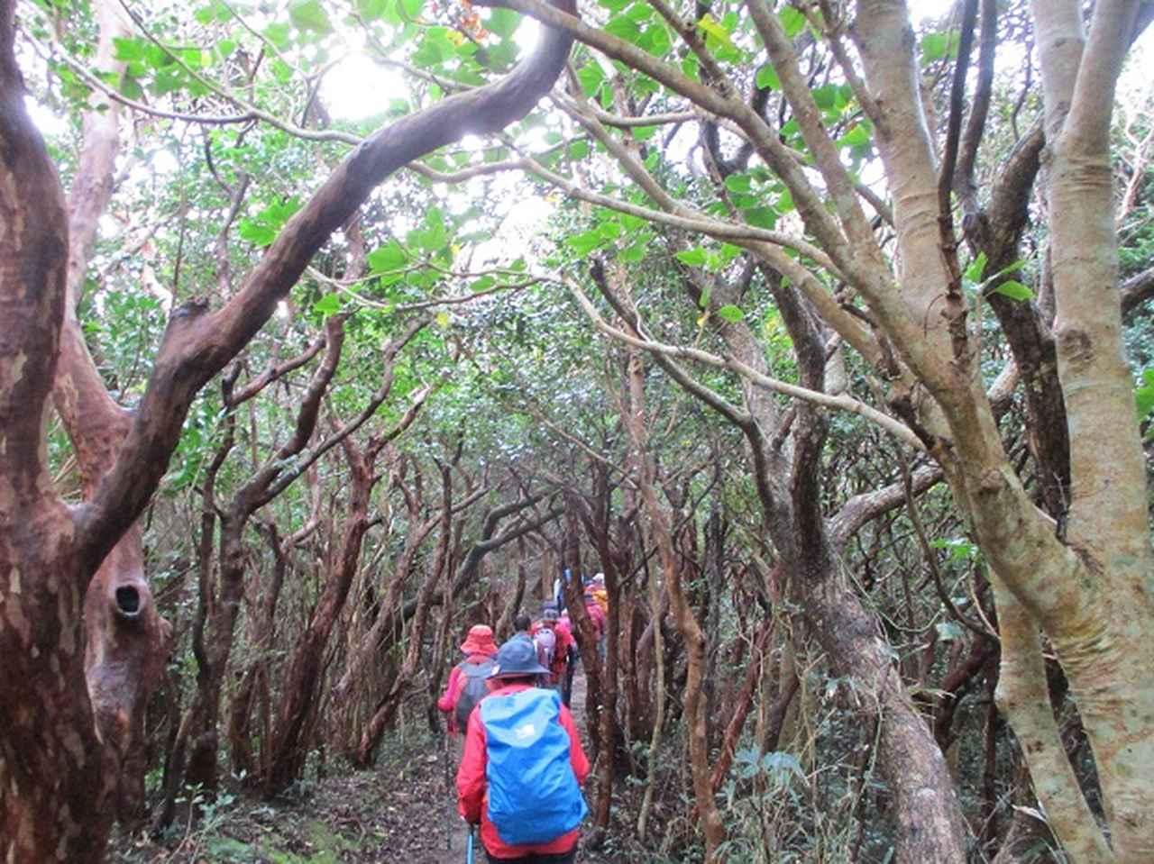 画像6: 先日12月11日より山旅会 「神津島」 ツアーに いってまいりました!