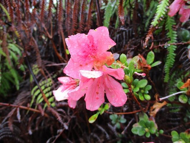 画像10: 先日12月11日より 山旅会 「神津島」 ツアーに いってまいりました!