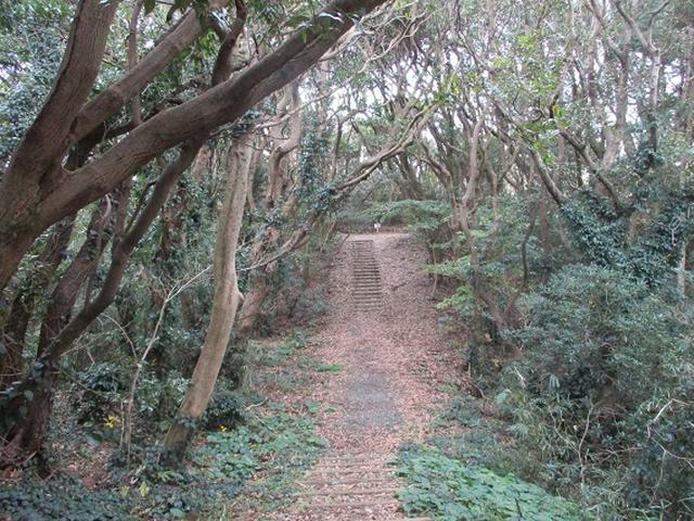 画像5: 12月の山旅会 「須崎遊歩道」 ツアーの直前下見報告です