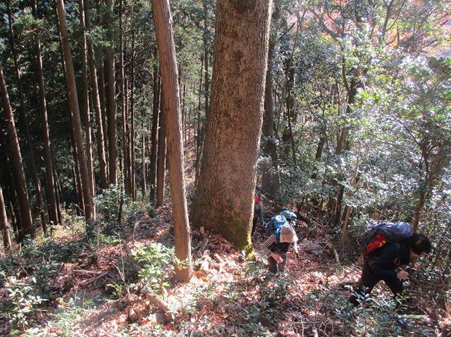 画像7: 岡田ガイドからの便り・戸倉城山ツアーにいってまいりました!