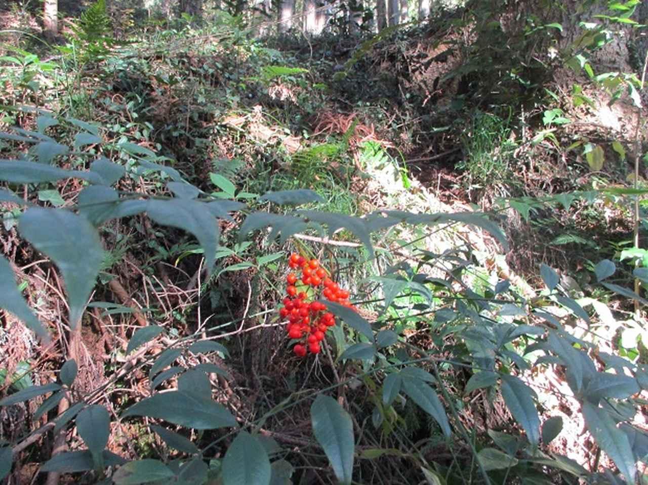 画像4: 岡田ガイドからの便り・戸倉城山ツアーにいってまいりました!